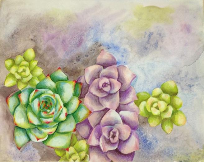 succulents_5663