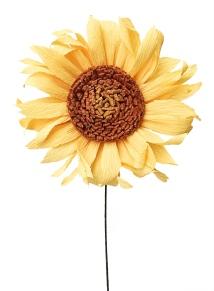 sunflower_1421