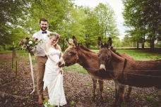 donkeys_8734
