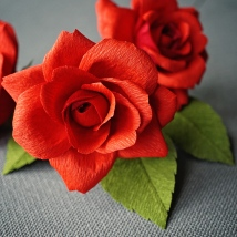 tea_rose_red_0274
